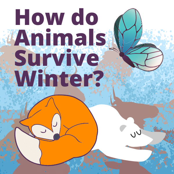 How do Animals Survive the Winter