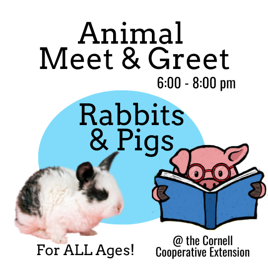 Meet and Greet. Rabbits and Pigs
