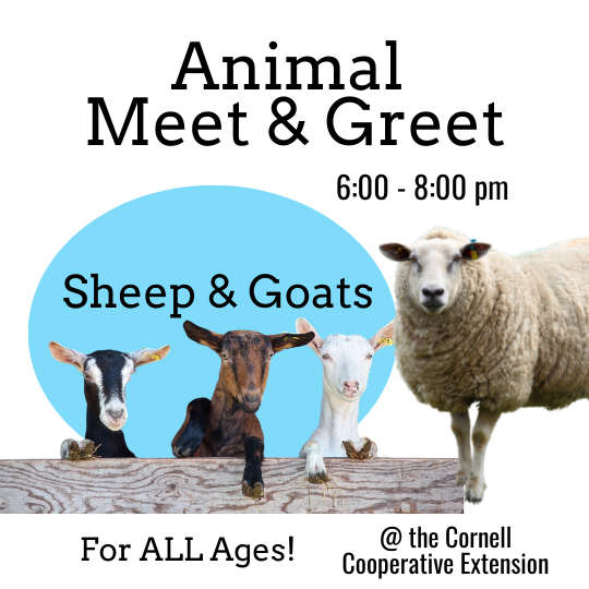 Meet and Greet. Sheep and Goats